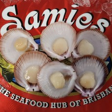 Half Shell Scallops (Pack of 6)